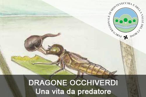 DRAGONE OCCHIVERDI