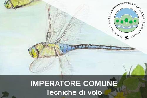IMPERATORE COMUNE