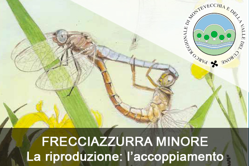 FRECCIAZZURRA MINORE