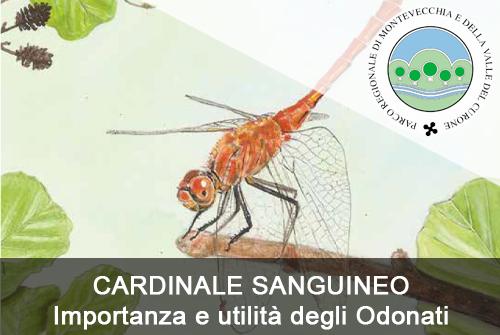 CARDINALE SANGUINEO