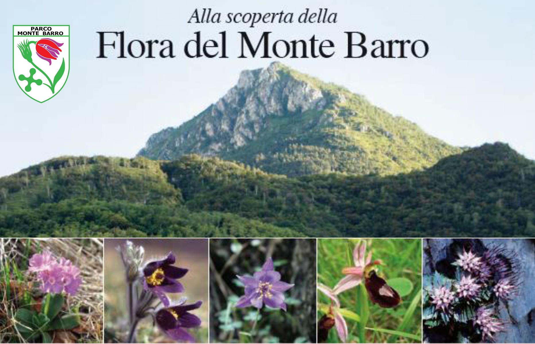I fiori del mese tratti dal libro Alla scoperta dei Fiori del Monte Barro